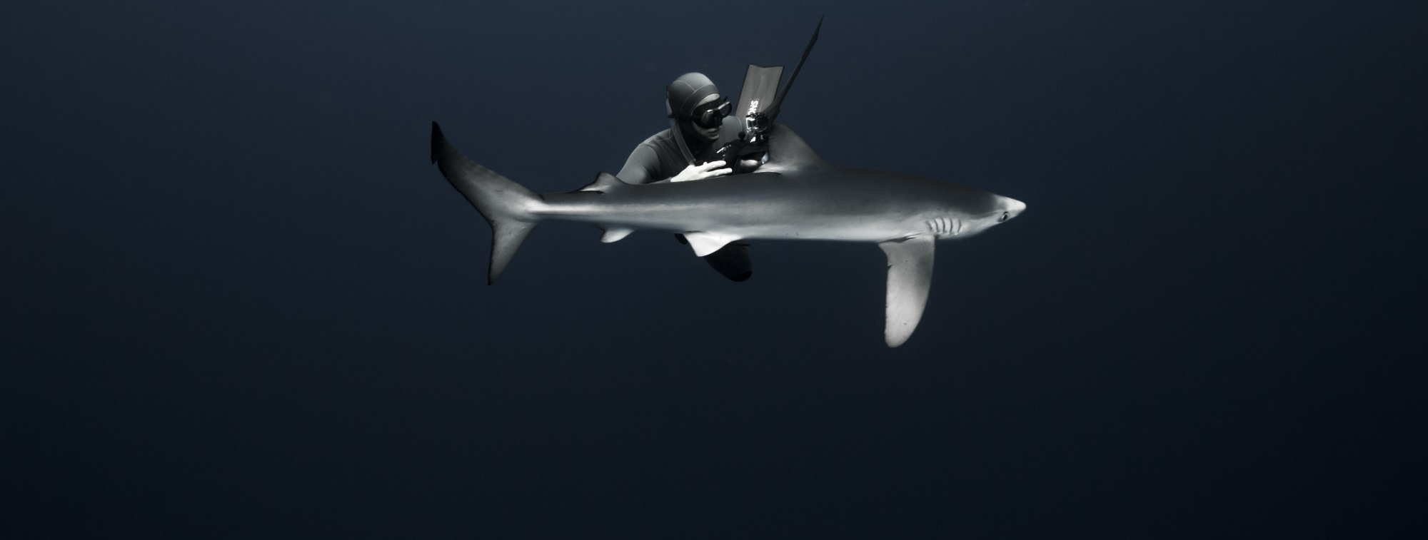 freediver and blue shark