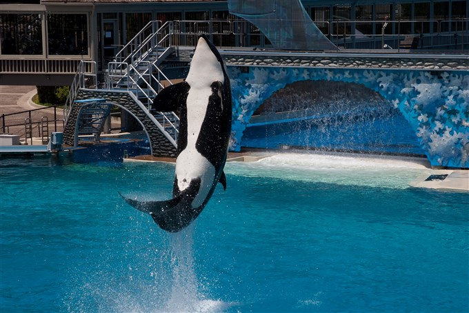 BLACKFISH AT SEA WORLD