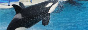 The Effect of Blackfish on Sea World