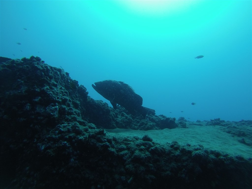 Scuba Diving Photo in Spain
