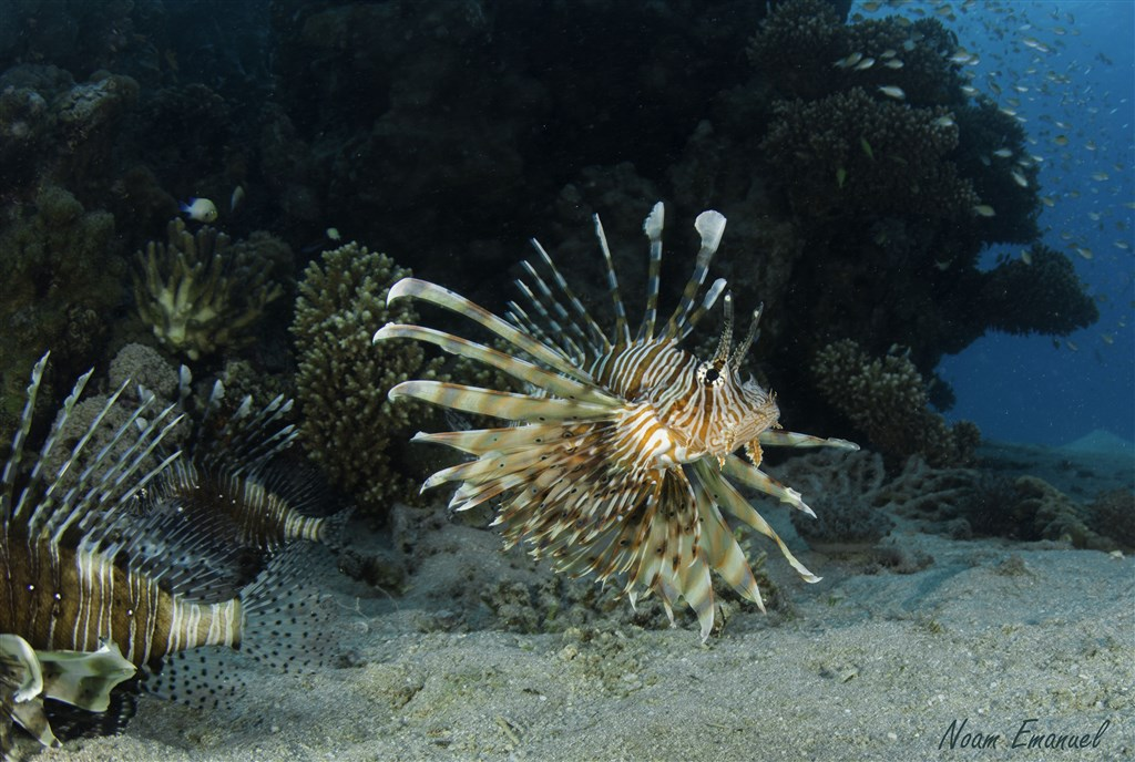 Scuba Diving Photo in Almog coral beach in Israel