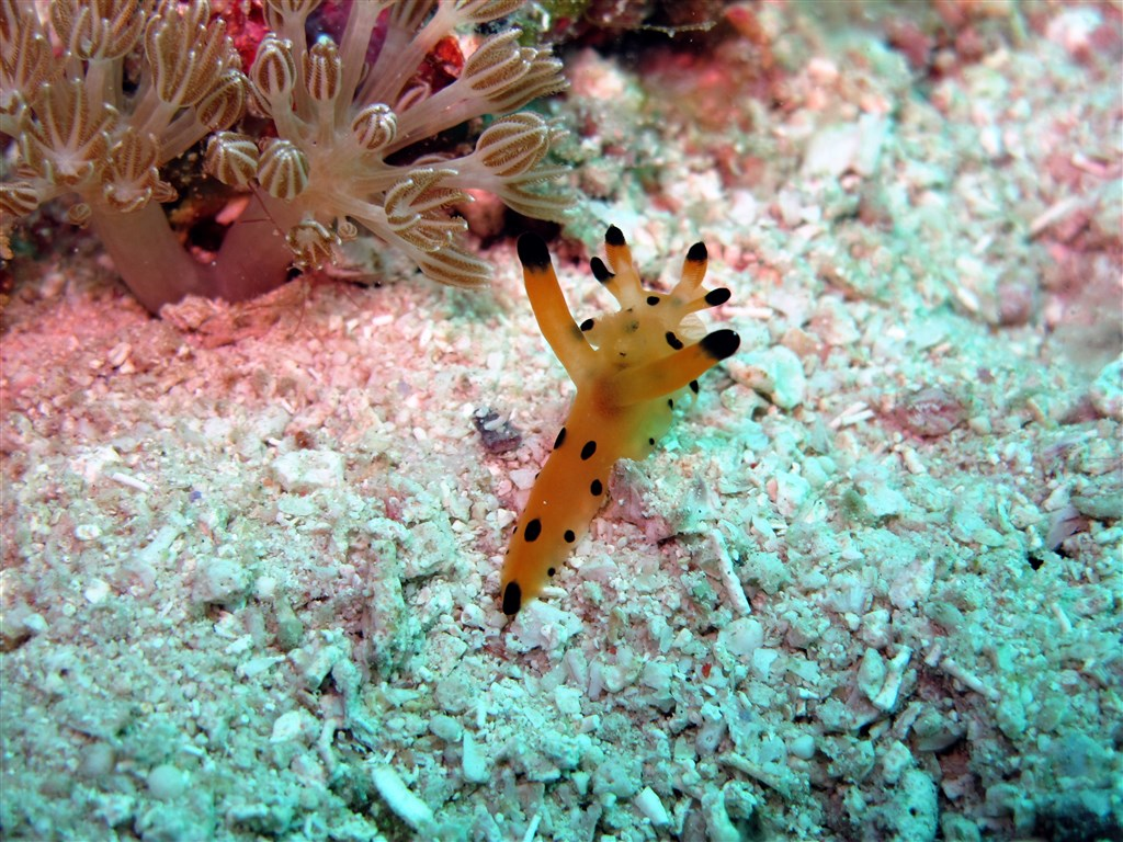 Scuba Diving Photo in Barracuda Point in Malaysia