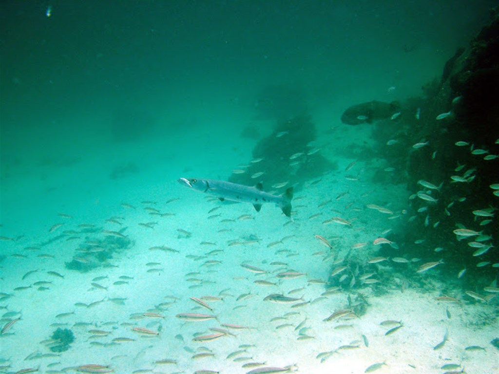 Scubadiving Margarita's photo in Los Frailes Islands  in Venezuela
