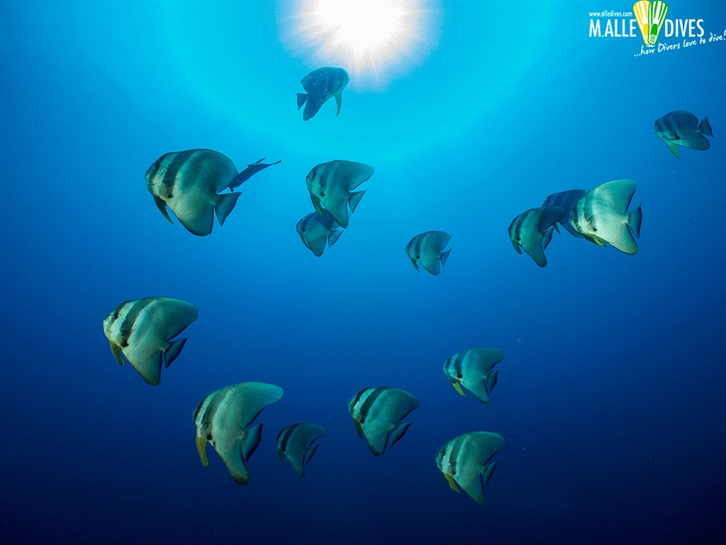 Scuba Diving Photo in the Maldives
