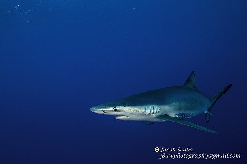 Foto von Cabo Shark Dive  in Mexiko