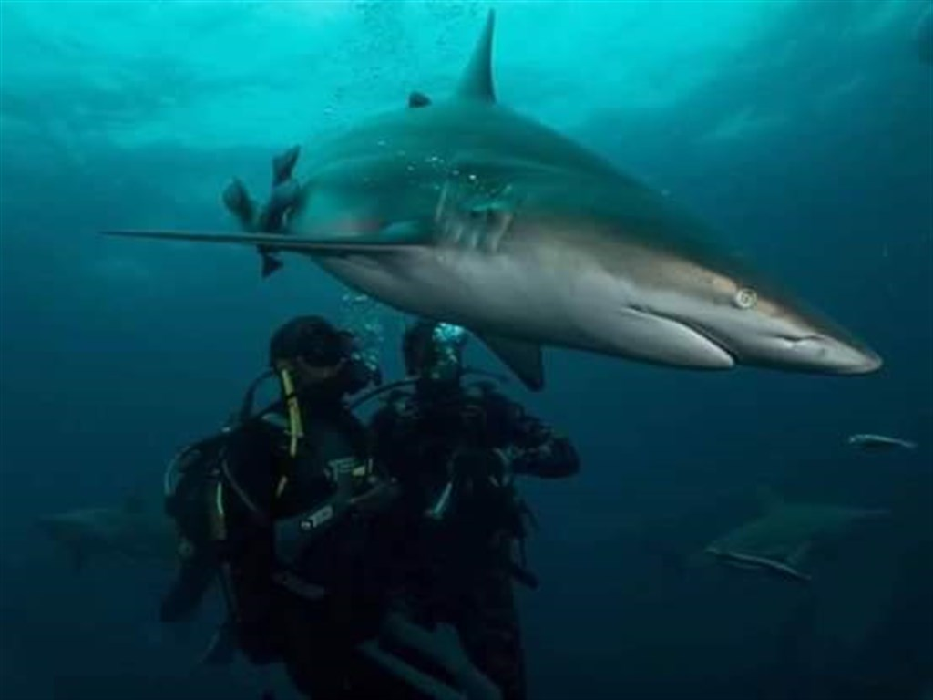 Scuba Diving Photo in PROTEA BANKS Northern Pinnacle in South Africa