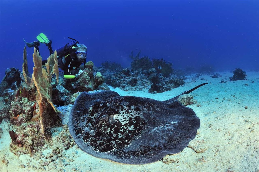 Scuba Diving Photo in Radames in Madagascar