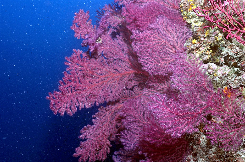 Scuba Diving Photo in Red Indian's Edge in Italy