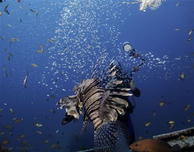 Red lionfish in Israel