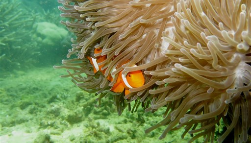 Scuba diving in TOLI TOLI in Indonesia