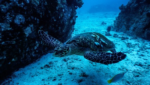Scuba diving in Seychelles