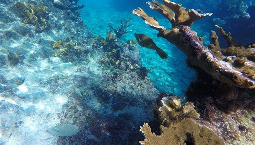 Tauch in Playa Coral in Kuba