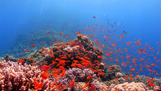 Scuba diving in The Saddle - Ras Goma in Egypt