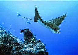 Scuba diving Pelagic Magic