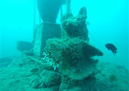 Scuba diving in El Raton in Spain