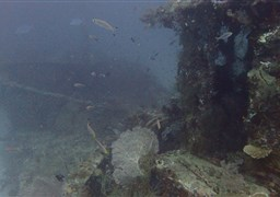 Scuba diving in Fesdhoo Wreck and Thila in the Maldives