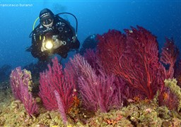 Scuba diving in Isuela Shallow in Italy