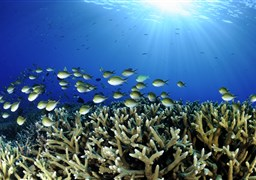 Scuba diving in Kondey Coral Garden in the Maldives