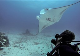 Scuba diving in Lankan Manta point in the Maldives