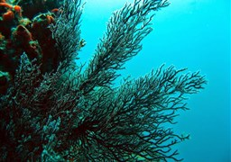 Scuba diving in Los Frailes Islands in Venezuela