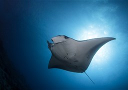 Buceo Deep South Equator 10 nights