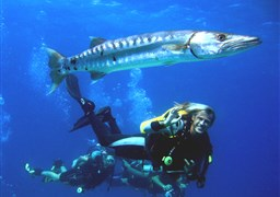 Scuba diving Best of Maldives