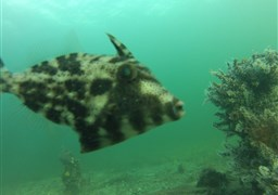 Scuba diving in Port Hughes in Australia