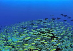 Scuba diving in Radames in Madagascar