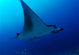 Scuba diving Central Atolls Classical Route