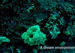 Buceo en Remezzo Reef (research area) en Grecia