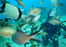 Scuba diving in Remezzo Grouper Reef in Greece