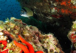 Scuba diving in Bajo de Dentro in Spain
