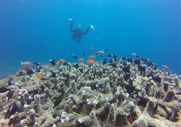 Scuba diving in The Channel in Indonesia