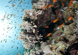 Scuba diving in Thomas Reef in Egypt