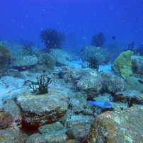 Richelieu Rock Dive site