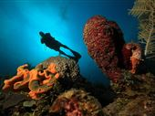 Scuba diving photo by UnderwaterCuba