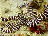 Scuba diving photo by OK Divers Resort & Spa