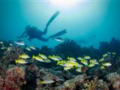Scuba diving photo by Fulidhoo Dive