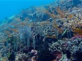 Scuba diving photo by Zen Dive Bali
