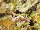 Scuba diving photo by Amigo Dive Center Juara Tioman