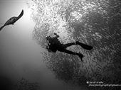Scuba diving photo by Administrator