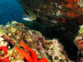 Scuba diving photo by Mangamar Dive Center