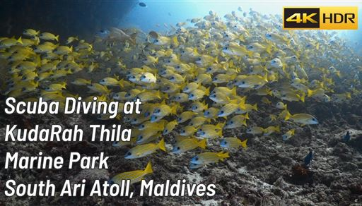 Scuba diving in Kudarah Thila in the Maldives