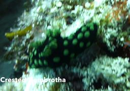Scuba diving in Panglao Island in Philippines